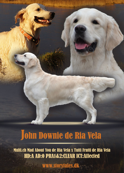 Enzo, john downie de ria vela, Golden Retriever, Ichthyosis, ICT, FRI, Clear, hanhund