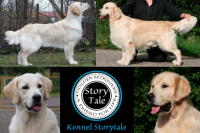 Kennel Storytale, Boss In Motion de Ria Vela, Höhrmann's Charmed by miss Nala, Storytale Safe and Sound